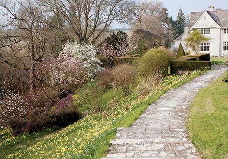 Ogród w Sherwood. Magnoliami wiosna się zaczyna