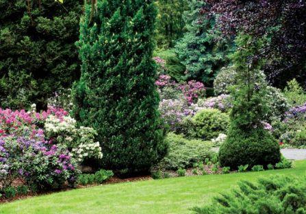 Ogród w Wojsławicach. W różanecznikowym ogrodzie