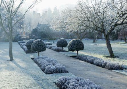 ogród zimą zdjęcia