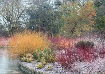 ogród zimą rośliny