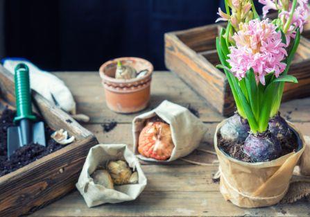 sadzenie wiosennych kwiatów