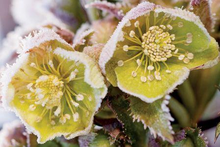 rośliny ozdobne zimą