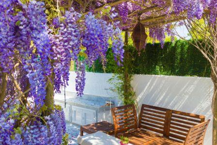 wisteria glicynia