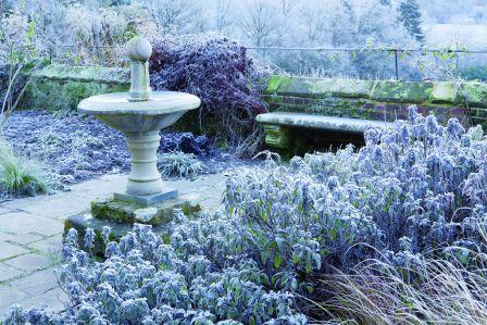 zimowy ogród piękny
