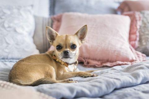 pastelowa sypialnia tkaniny łóżko