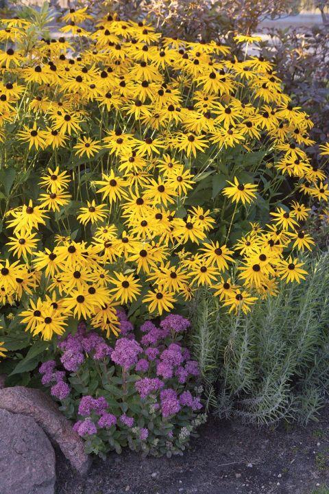 kwiaty w letnim ogrodzie