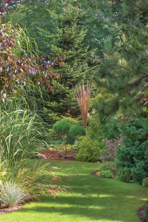ozdobne trawy w ogrodzie