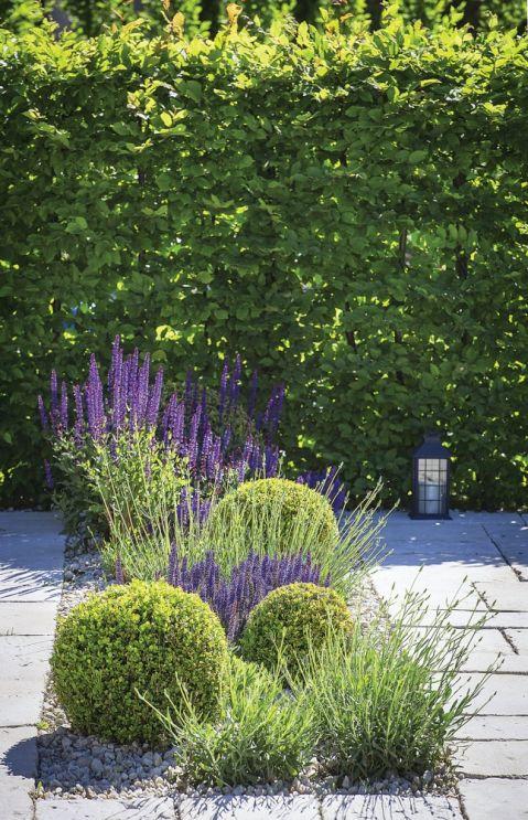 fioletowe rośliny ogrodowe