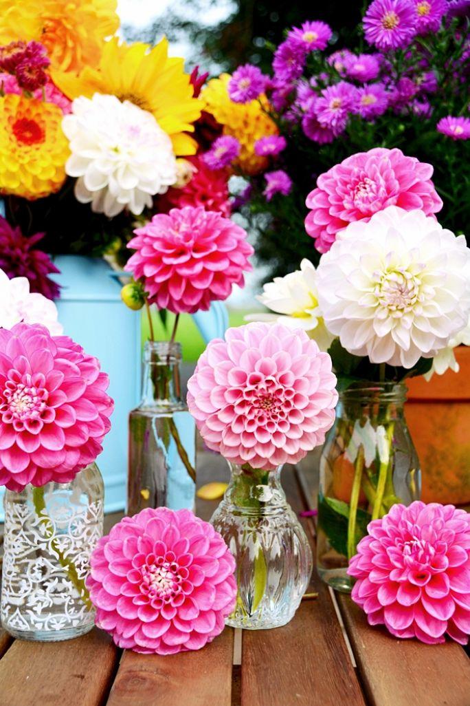 jesienne kwiaty dalie