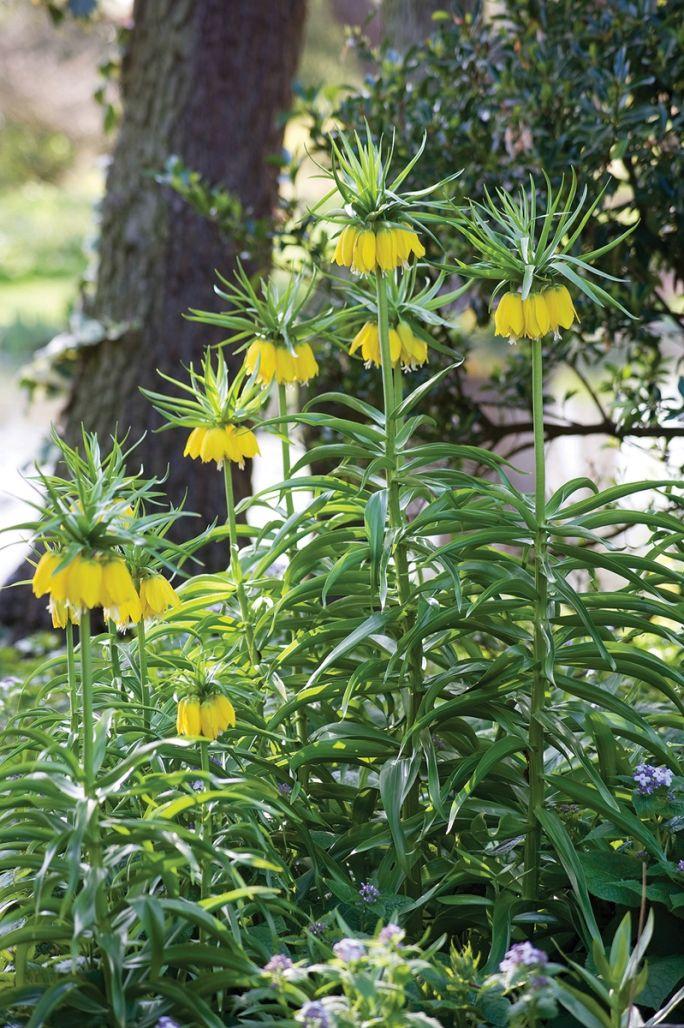 Ogród Fullers Mill kwiaty