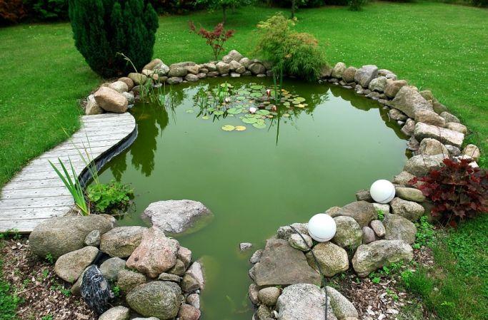 rośliny do oczka wodnego w ogrodzie