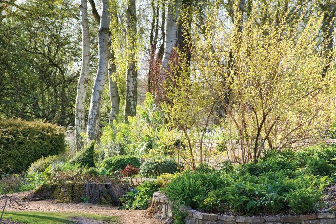 ogród angielski rośliny