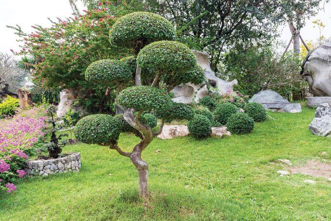 drzewa formowane niwaki