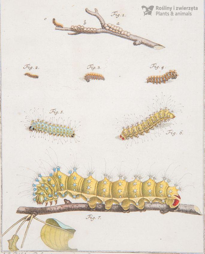 rośliny i zwierzęta atlasy historii naturalnej