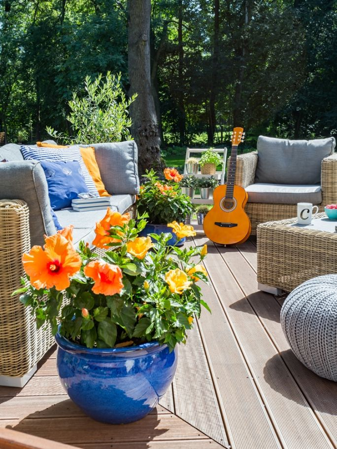 kwiaty doniczkowe kwitnące na balkon i taras