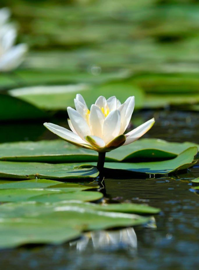 rośliny do oczek wodnych
