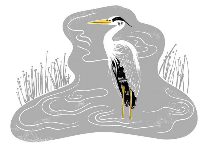 ilustracje ze zwierzętami Zuza Miśko