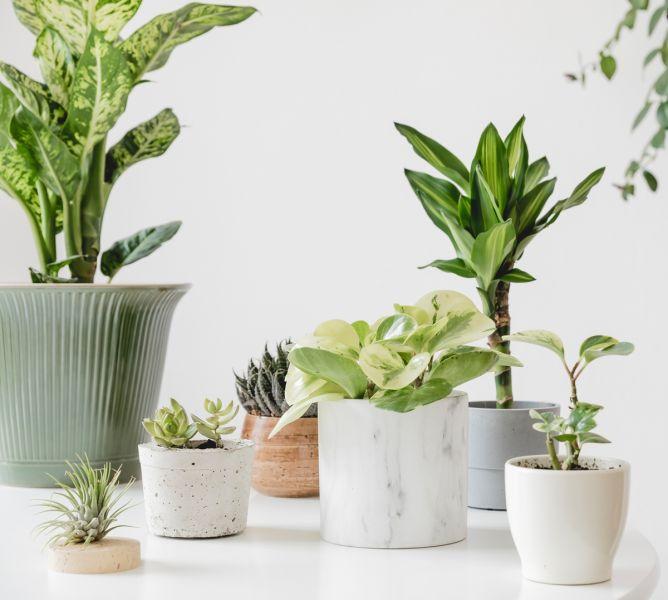 rośliny egzotyczne w  domu
