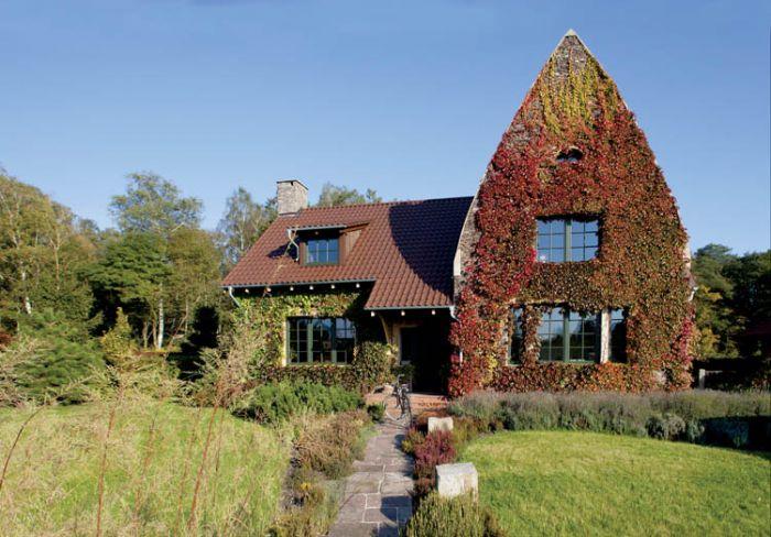 dom z kamienia bluszcz