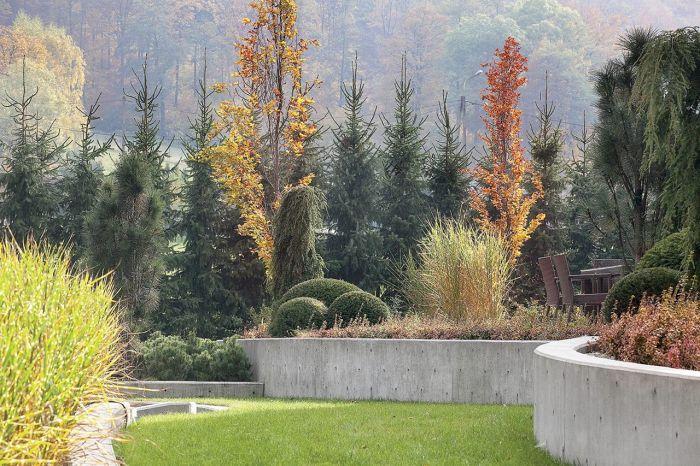 jesienny ogród buki