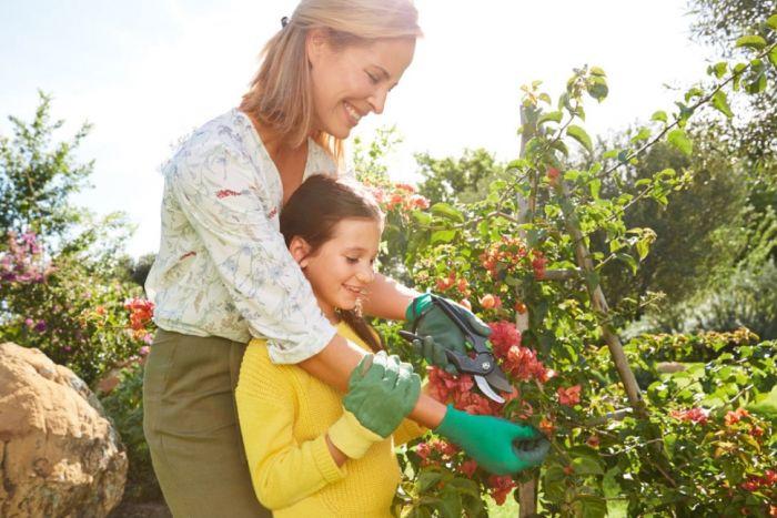 Jak i kiedy przycinać drzewa owocowe, krzewy, iglaki, tuje i róże