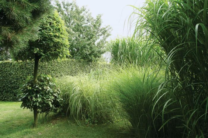 Ogrd pełen traw i drzew. Ogród pełen traw i żywopłotów