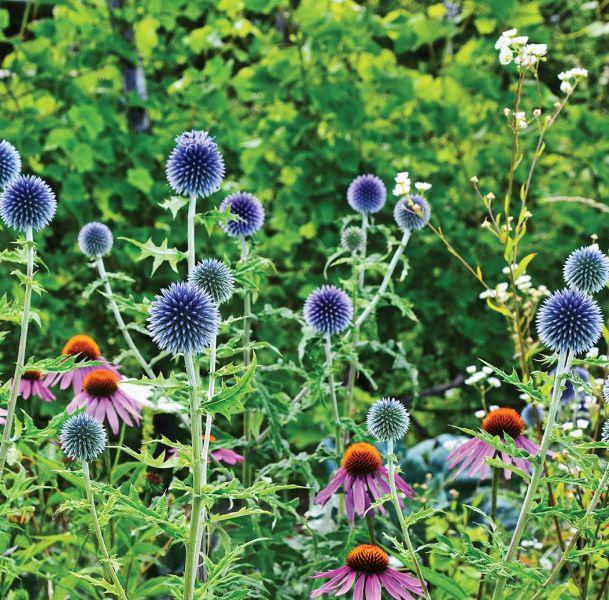 ogród odporny na suszę