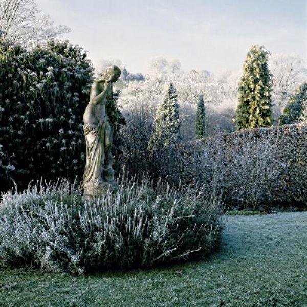 Ogród w zimowej szacie. Ogród w zimowej szacie