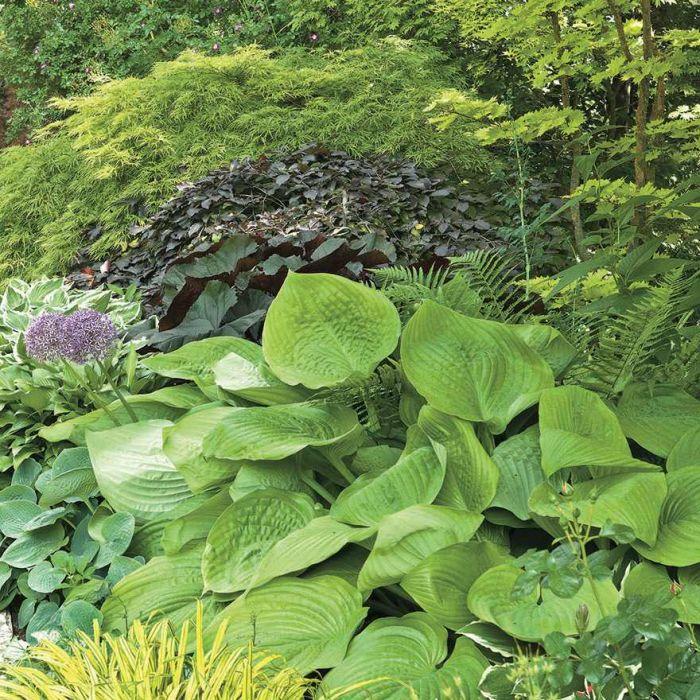 aranżacja ogrodu rośliny