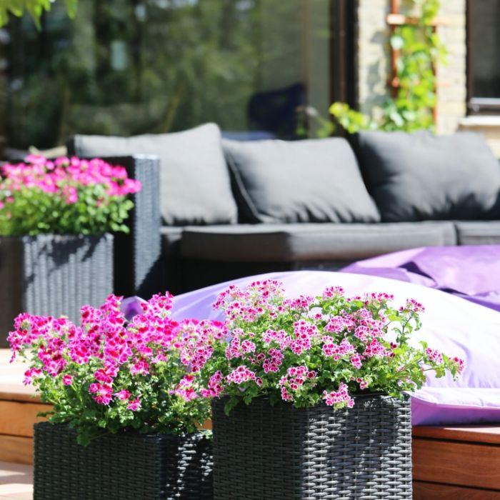 Kwiaty na taras – jakie rośliny wybrać na słoneczny, a jakie na zacieniony na taras?