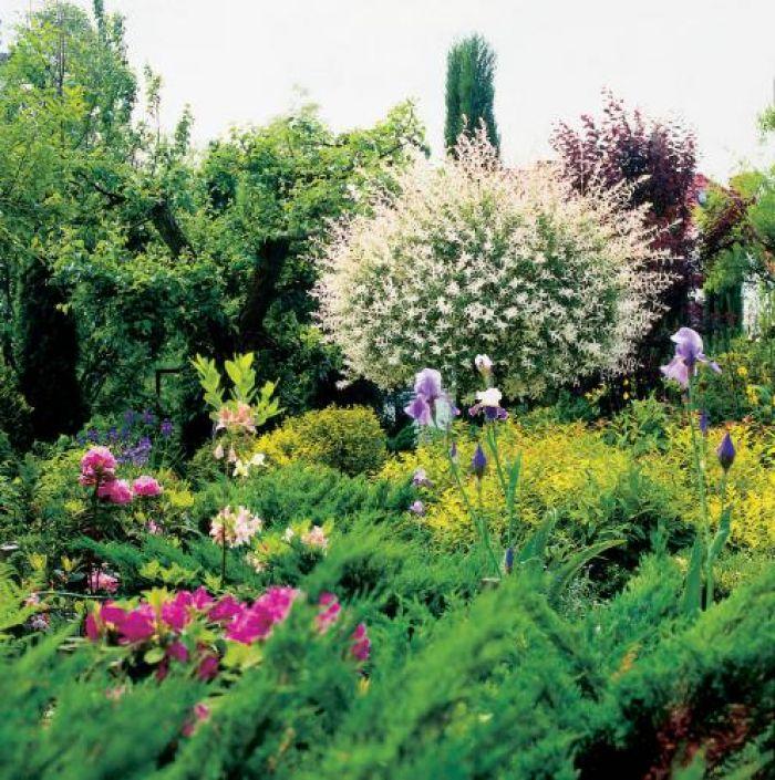 Dzisiaj w tym starym ogrodzie zachwycają kolory.