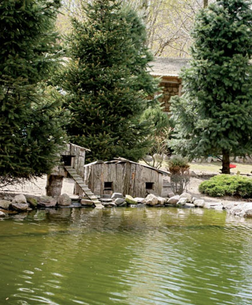 Budki dla wodnych ptaków. Ogród miłośnika ptaków