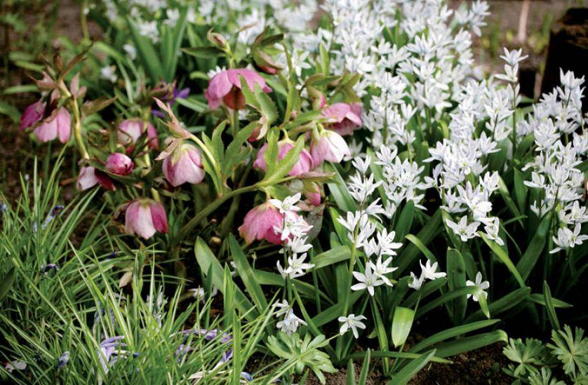 Niepozorne białe kwiatki pozwalają odpocząć oczom.