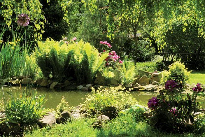 Aby ziemia nie spływała, brzeg stawu umocniono kamieniami i obaszdzono roślinami - rozwiązanie, jak widać,