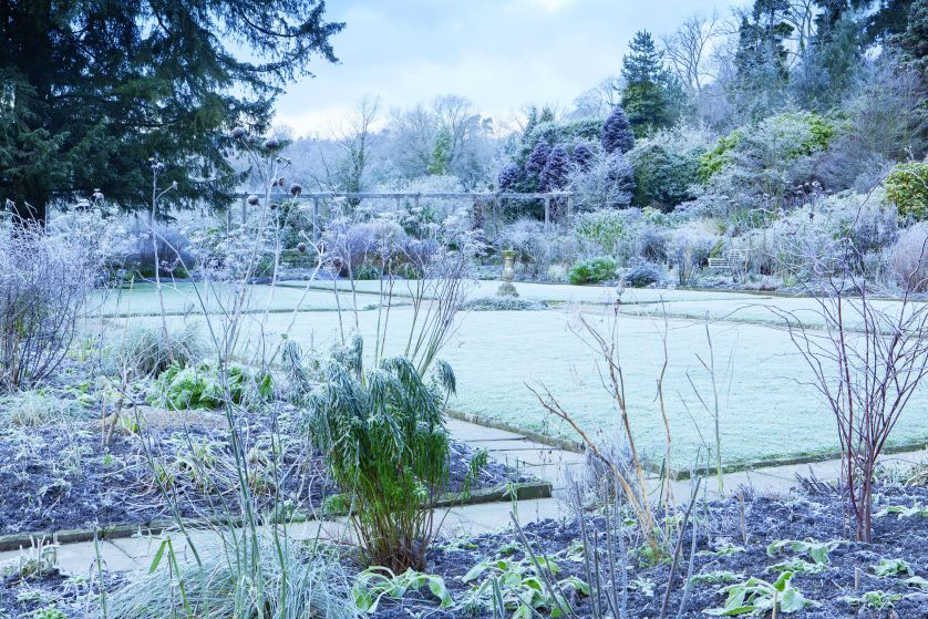 zimowy ogród dziko rosnący