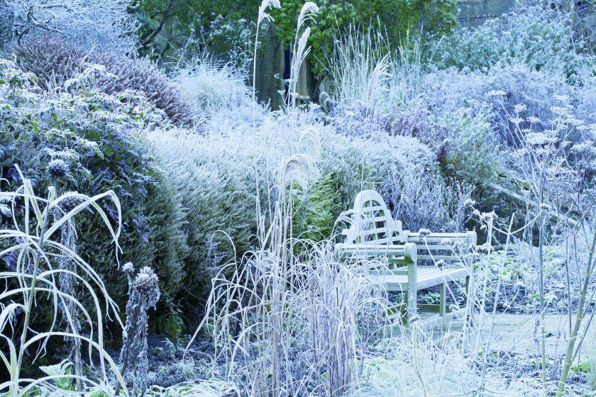 zimowy ogród w stylu angielskim