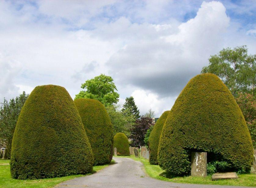 Baza roślin do ogrodu: iglaki