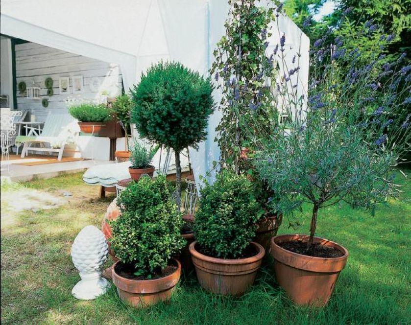 Donice ułatwią wyeksponowanie roślin.