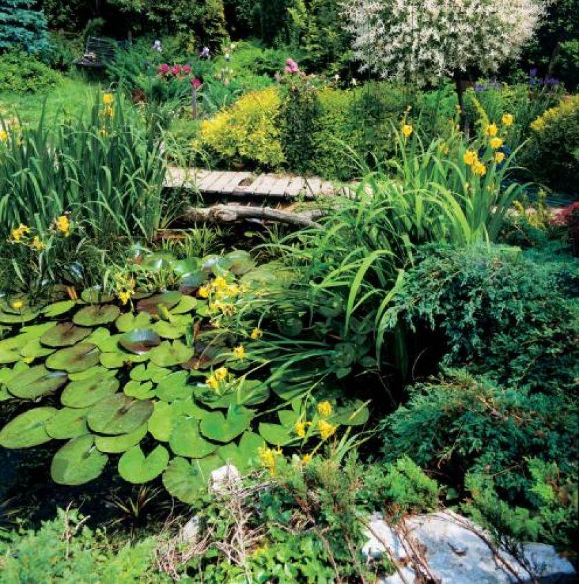 Na wodzie unoszą się grzybienie popularnie nazywane lilią wodną.