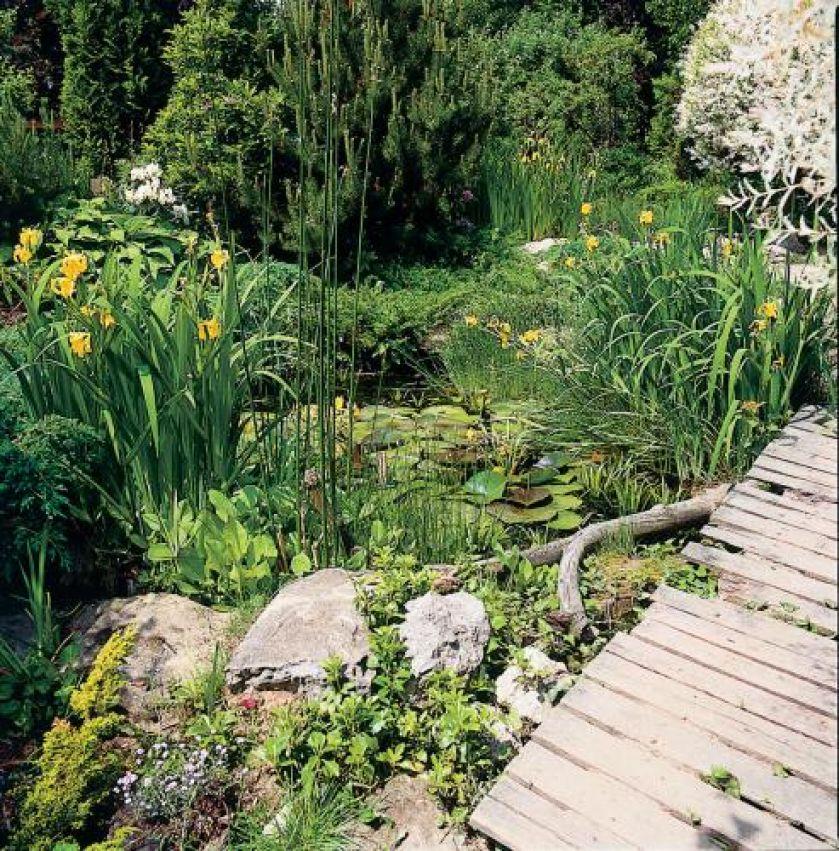 Ogród sprawia wrażenie na wpół dzikiego.